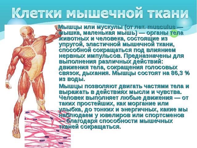 Мышцы или мускулы (от лат. musculus — мышка, маленькая мышь) — органы тела ж...