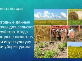 Прогноз погоды Погодные данные нужны для сельского хозяйства. Когда выгоднее
