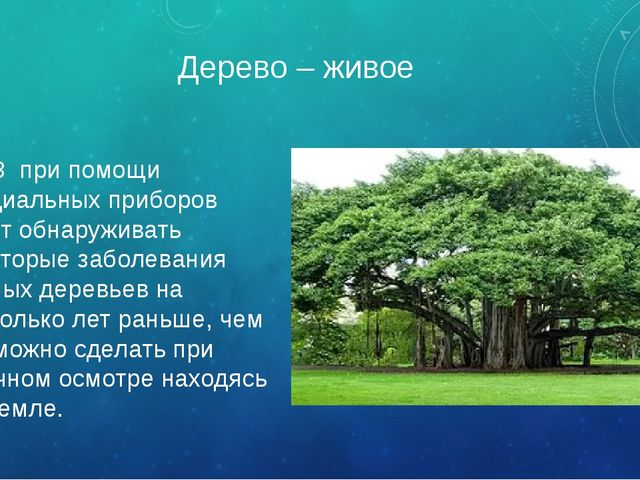 Дерево – живое ИСЗ при помощи специальных приборов могут обнаруживать некотор...