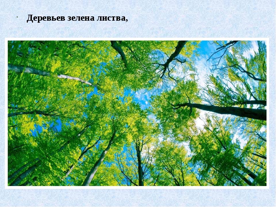 Деревьев зелена листва,