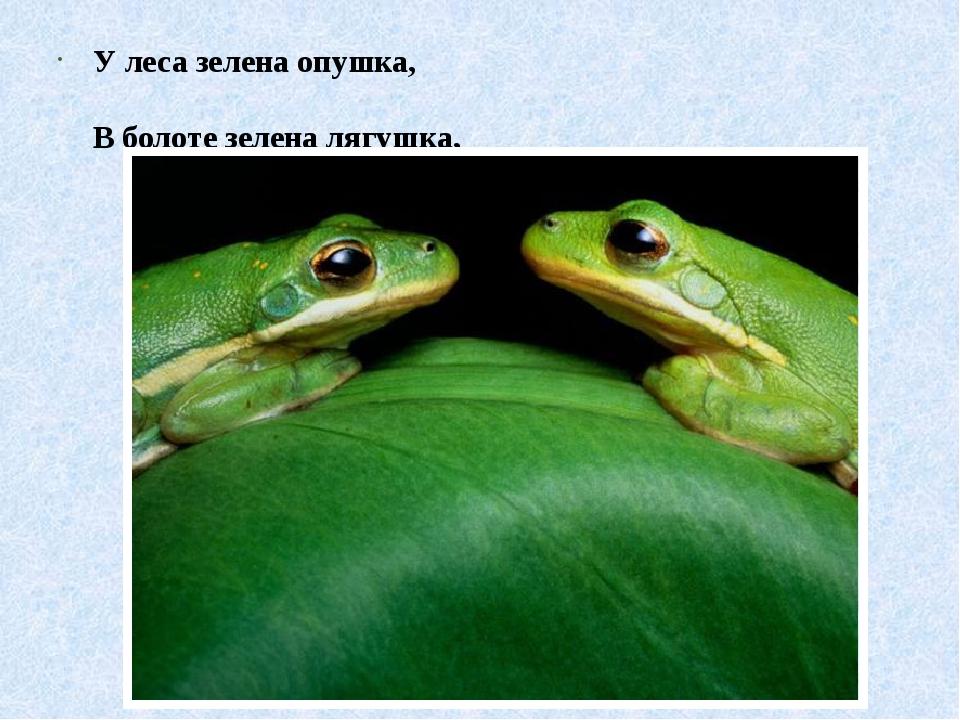 У леса зелена опушка, В болоте зелена лягушка,