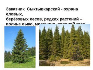 Заказник Сыктывкарский - охрана еловых, берёзовых лесов, редких растений – во