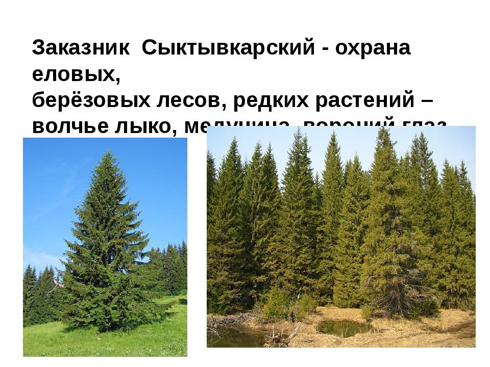 Заказник Сыктывкарский - охрана еловых, берёзовых лесов, редких растений – во...