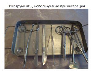 Инструменты, используемые при кастрации