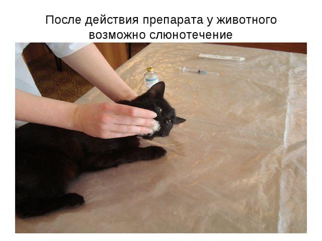После действия препарата у животного возможно слюнотечение