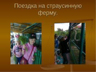 Поездка на страусинную ферму.