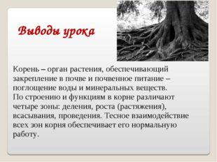 Выводы урока Корень – орган растения, обеспечивающий закрепление в почве и по