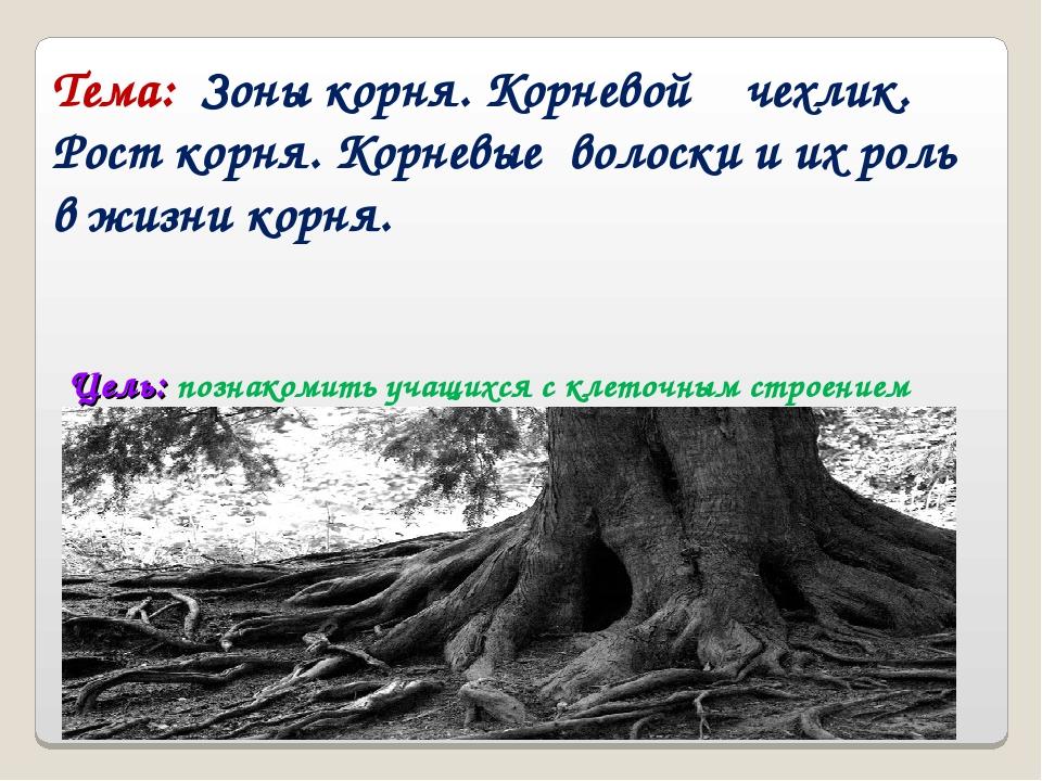 Цель: познакомить учащихся с клеточным строением корня: изучить зоны корня,...