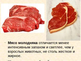 Мясо молодняка отличается менее интенсивным запахом и светлее, чем у взрослых