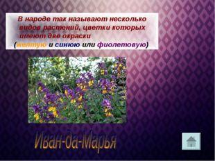 В народе так называют несколько видов растений, цветки которых имеют две окра