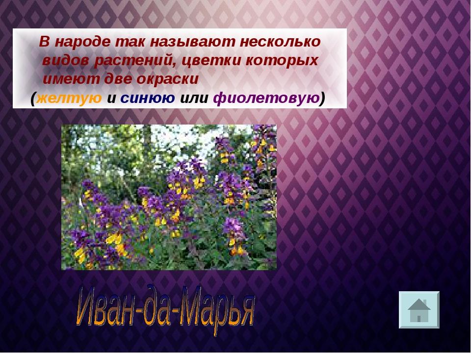 В народе так называют несколько видов растений, цветки которых имеют две окра...