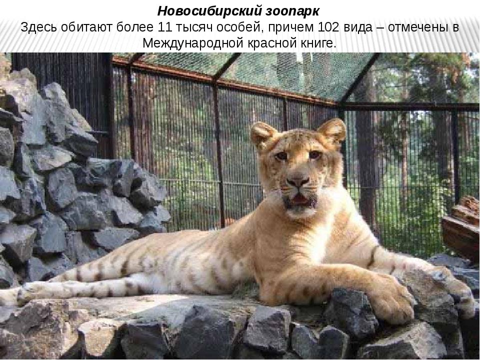 Новосибирский зоопарк Здесь обитают более 11 тысяч особей, причем 102 вида –...