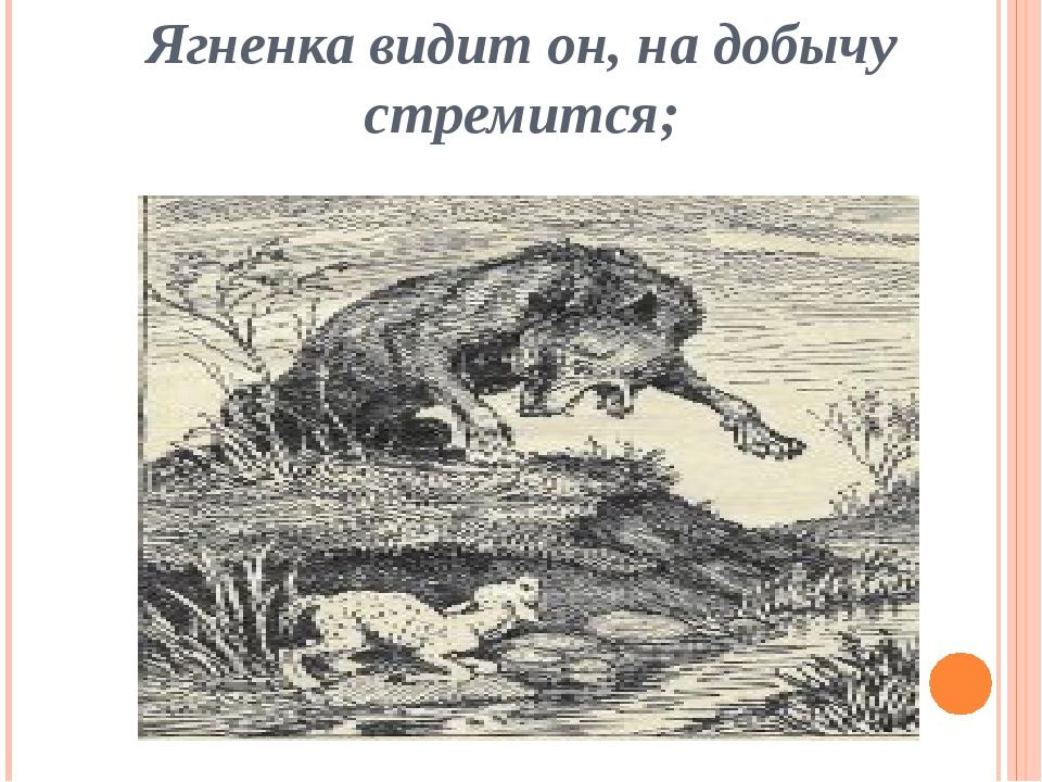 Ягненка видит он, на добычу стремится;