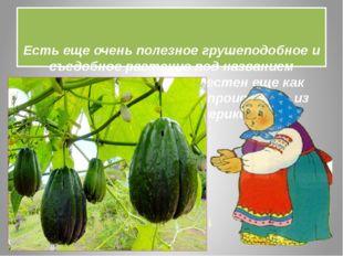 Есть еще очень полезное грушеподобное и съедобное растение под названием -Ч