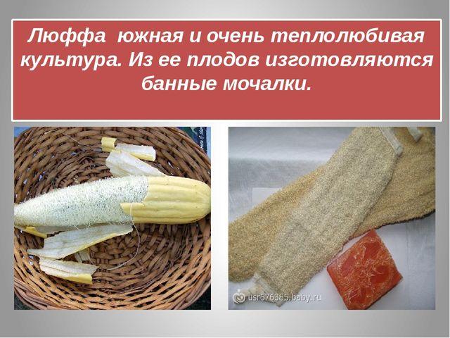 Люффа южная и очень теплолюбивая культура. Из ее плодов изготовляются банные...