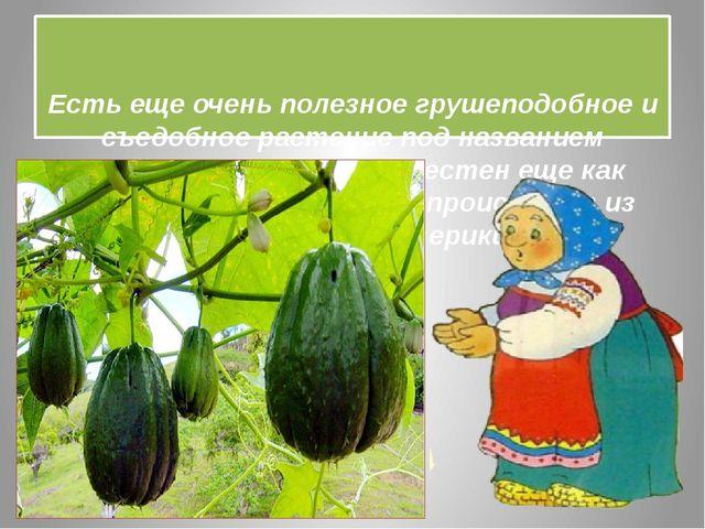 Есть еще очень полезное грушеподобное и съедобное растение под названием -Ч...