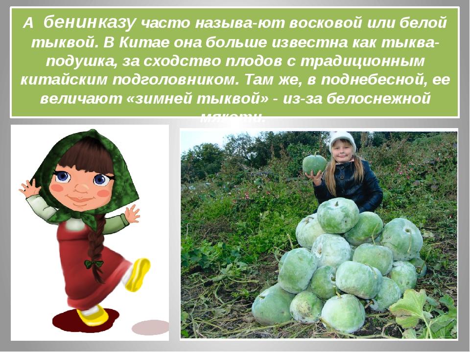 А бенинказу часто называютвосковой или белой тыквой. В Китае она больше изв...