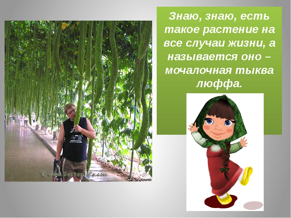 Знаю, знаю, есть такое растение на все случаи жизни, а называется оно – моча...