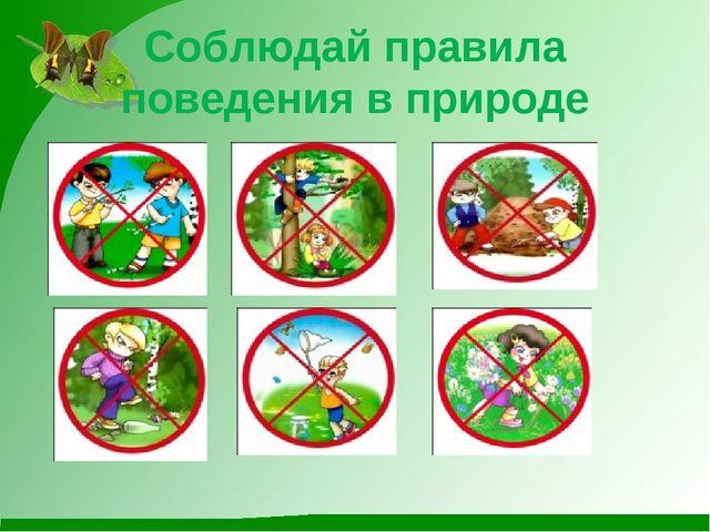 правила поведения на природе картинки