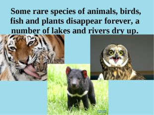 Some rare species of animals, birds, fish and plants disappear forever, a nu