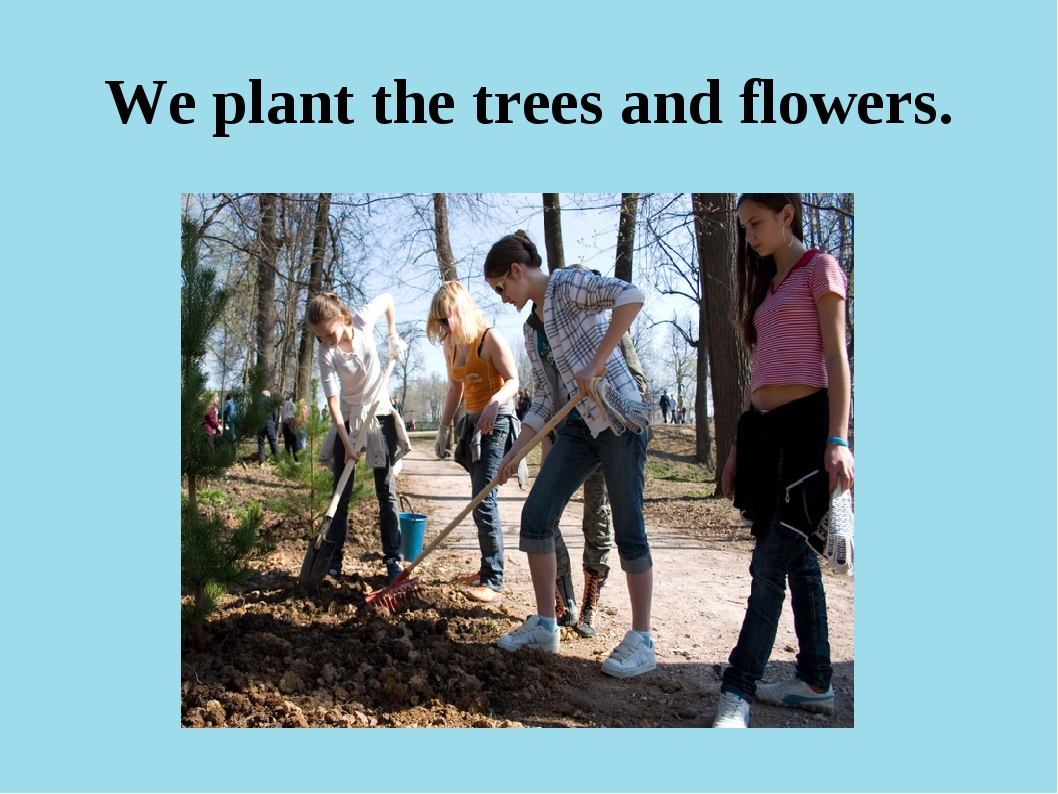 We plant the trees and flowers.
