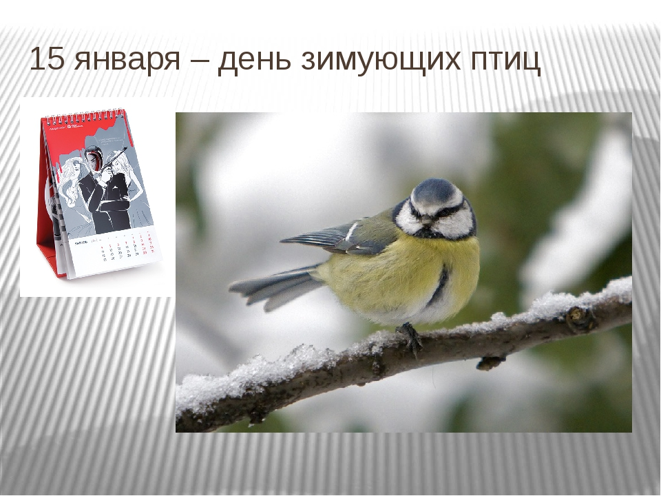 15 января – день зимующих птиц