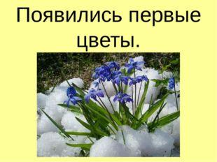 Появились первые цветы.