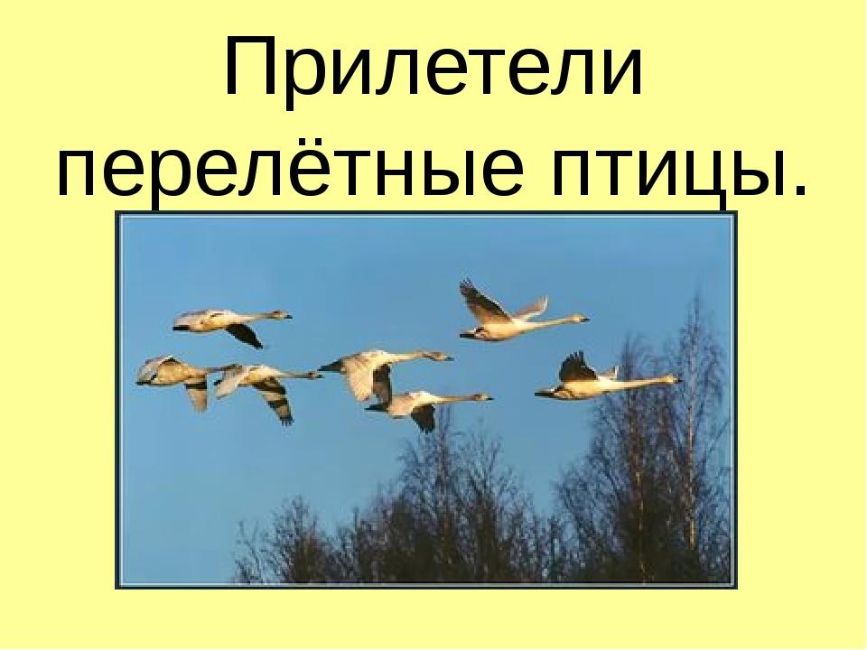 Прилетели перелётные птицы.
