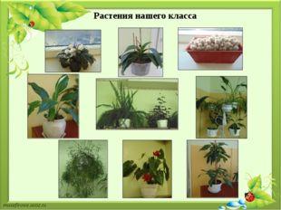 Растения нашего класса