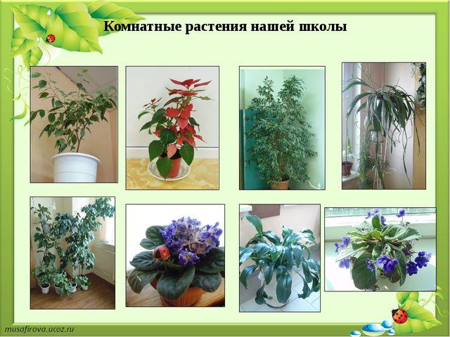 Комнатные растения нашей школы