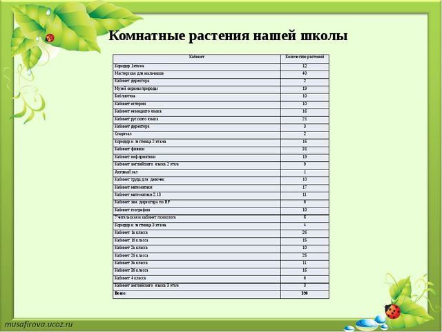 Комнатные растения нашей школы Кабинет Количество растений Коридор 1этажа 12...