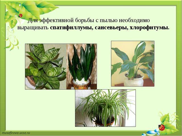 Для эффективной борьбы с пылью необходимо выращиватьcпатифиллумы, сансевьеры...