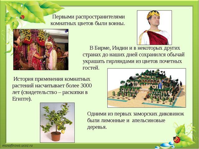 Первыми распространителями комнатных цветов были воины. В Бирме, Индии и в не...