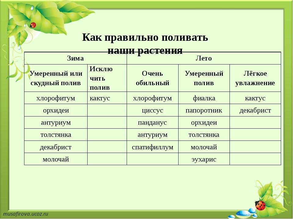 Как правильно поливать наши растения Зима Лето Умеренный или скудный полив И...