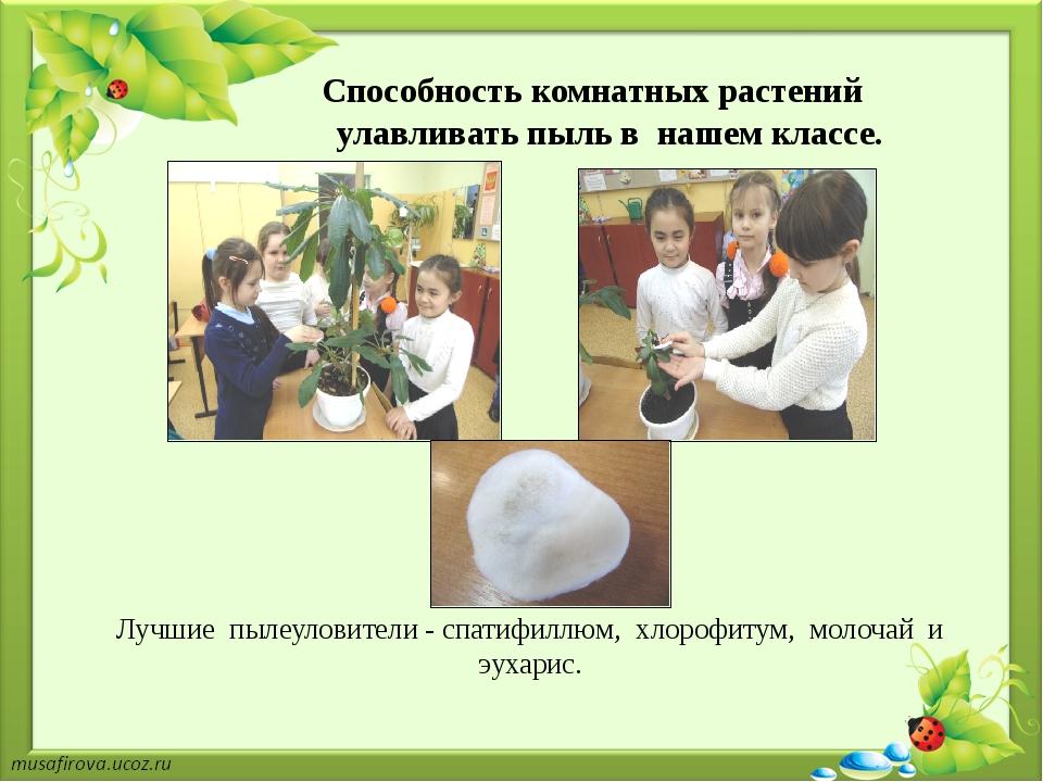 Способность комнатных растений улавливать пыль в нашем классе. Лучшие пылеул...