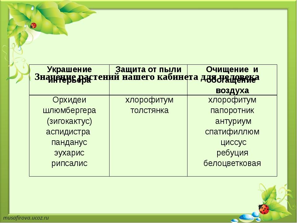 Значение растений нашего кабинета для человека Украшение интерьера Защита от...