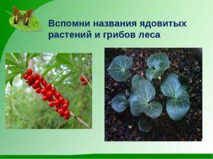 Вспомни названия ядовитых растений и грибов леса