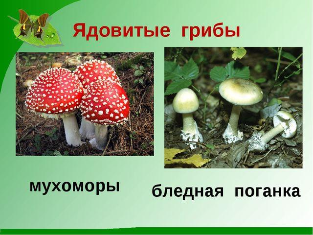Ядовитые грибы мухоморы бледная поганка
