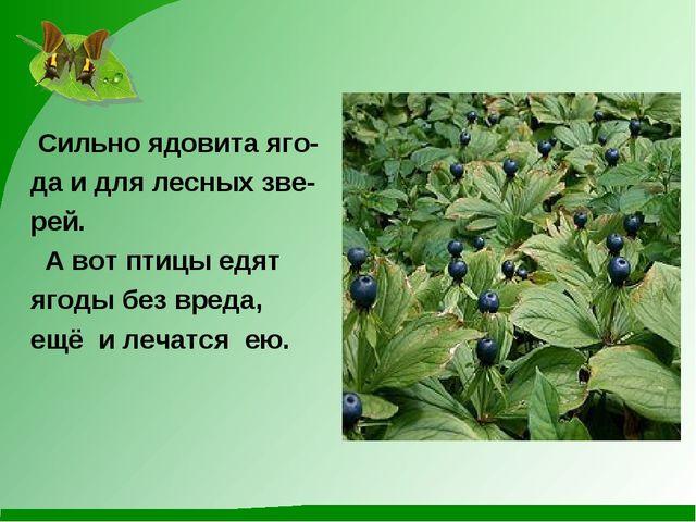 Сильно ядовита яго- да и для лесных зве- рей. А вот птицы едят ягоды без вре...