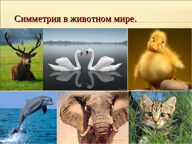 Симметрия в животном мире.