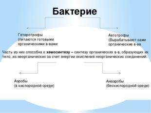 Бактерие Гетеротрофы (питаются готовыми органическими в-вами Автотрофы (Выраб