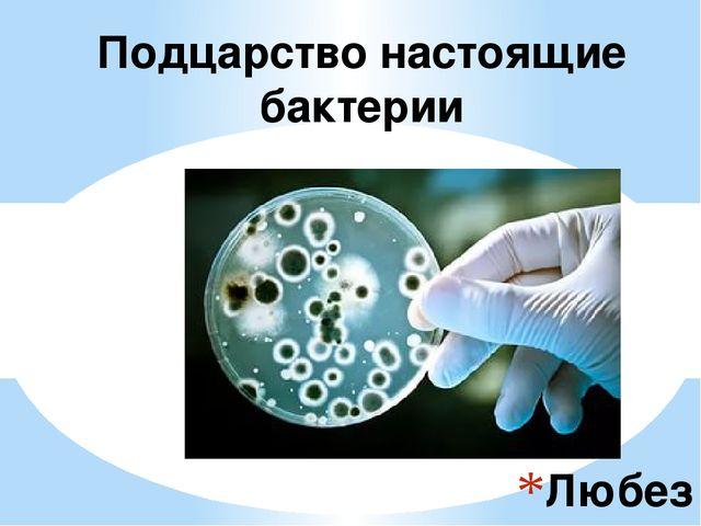 Любезнова Елена Г. Перевоз 2016 Подцарство настоящие бактерии
