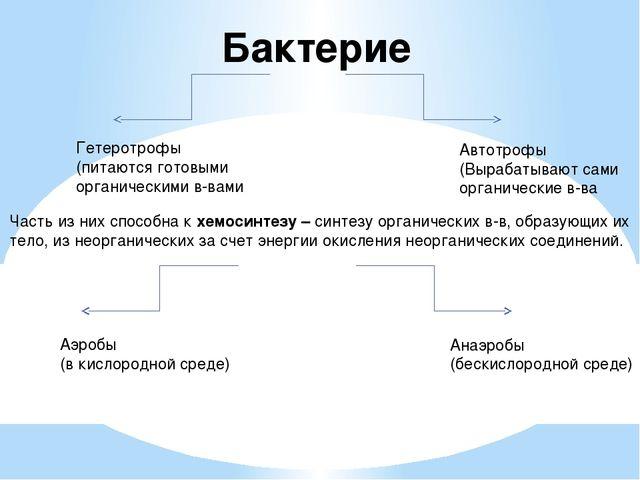 Бактерие Гетеротрофы (питаются готовыми органическими в-вами Автотрофы (Выраб...