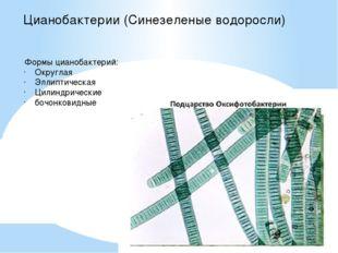 Цианобактерии (Синезеленые водоросли) Формы цианобактерий: Округлая Эллиптиче