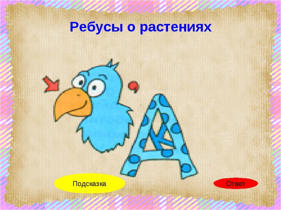 Ребусы о растениях клюква Ответ Клюв К в А Подсказка scul32.ucoz.ru