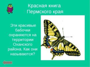 Эти красивые бабочки охраняются на территории Оханского района. Как они назы