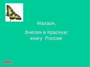 Махаон, Внесен в Красную книгу России