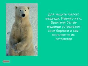 Для защиты белого медведя. Именно на о. Врангеля белые медведи устраивают сво