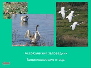 Астраханский заповедник Водоплавающие птицы