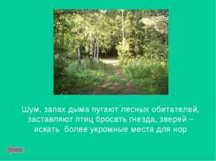 Шум, запах дыма пугают лесных обитателей, заставляют птиц бросать гнезда, зве
